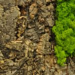 Cork in Raw Bark and Arctic Moss in May Green Boardroom Feature Wall-11