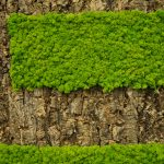 Cork in Raw Bark and Arctic Moss in May Green Boardroom Feature Wall-7